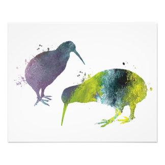 Impression Photo Oiseaux de kiwi