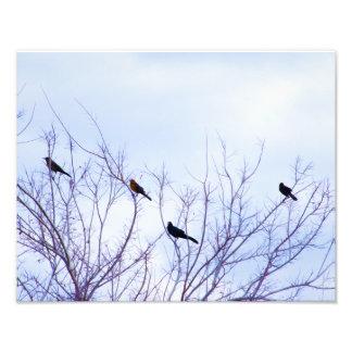 Impression Photo Oiseaux de peinture à l'huile de Digitals sur une