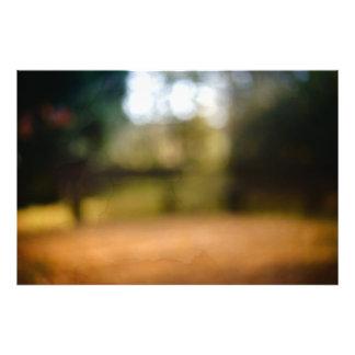 Impression Photo Parc d'automne