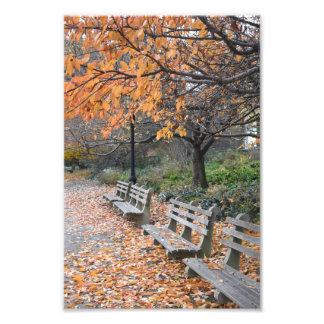 Impression Photo Parc New York City NYC de rive de feuille