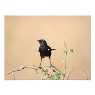 Impression Photo Petit oiseau noir sur la branche de Bush