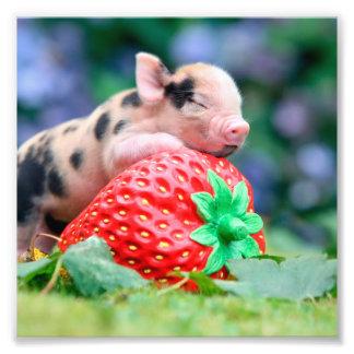 Impression Photo porc de fraise