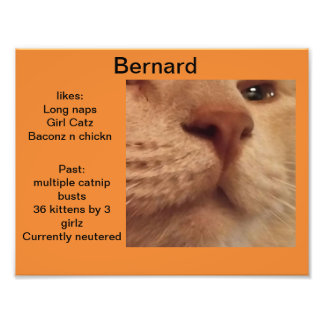 Impression Photo Profil orange de chat de Bernard