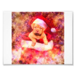 IMPRESSION PHOTO PUPPIE LABRADOR CHRISTMAS