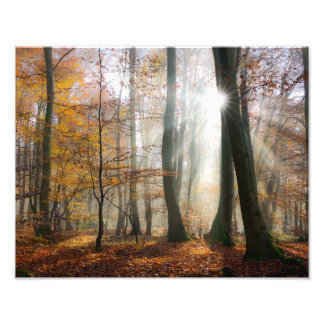 Impression Photo Sun rayonne la forêt pittoresque brumeuse mystique