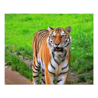 Impression Photo Tigre