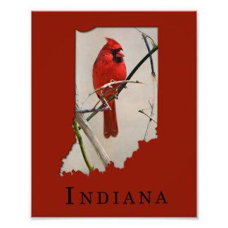 Impression Photo Un oiseau cardinal rouge sur une branche dans les