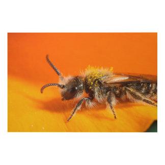 Impression Sur Bois Abeille pollinisant une fleur