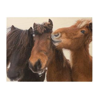 Impression Sur Bois Amis islandais de cheval, Islande