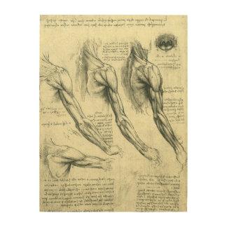 Impression Sur Bois Anatomie de bras et d'épaule par Leonardo da Vinci