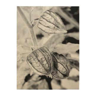 Impression Sur Bois Angulata de Physalis