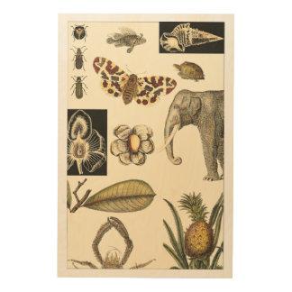 Impression Sur Bois Animaux assortis peints sur l'arrière - plan crème