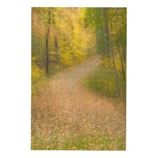 Impression Sur Bois Arbres dans des couleurs d'automne et la voie