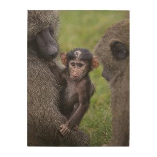 Impression Sur Bois Babouin de bébé étant présenté à son papa