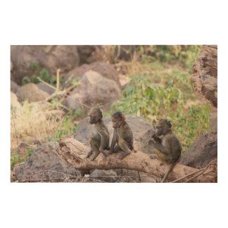 Impression Sur Bois Babouins jaunes de bébé