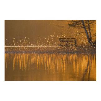 Impression Sur Bois Banc isolé par le lac dans la lumière d'or