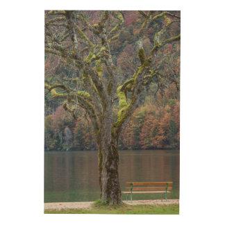Impression Sur Bois Banc tranquille le long d'un lac, Allemagne
