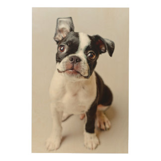 Impression Sur Bois Boston Terrier