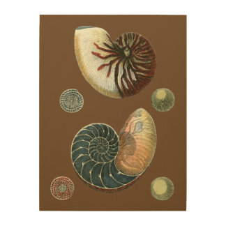 Impression Sur Bois Cacao Shell