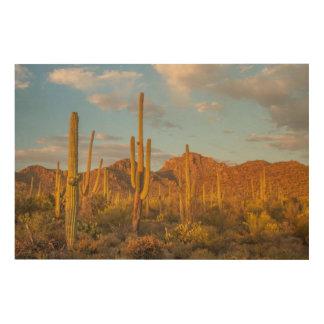 Impression Sur Bois Cactus de Saguaro au coucher du soleil, Arizona
