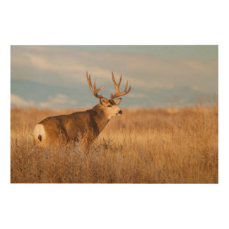 Impression Sur Bois Cerfs communs de mule dans la prairie d'hiver