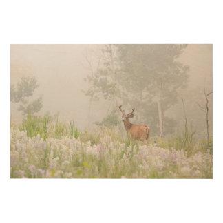 Impression Sur Bois Cerfs communs de mule dans le pré brumeux