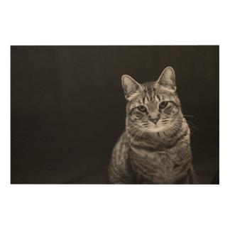 Impression Sur Bois Chaton tigré noir