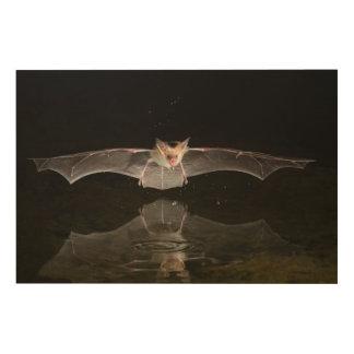 Impression Sur Bois Chauve-souris buvant en vol, l'Arizona