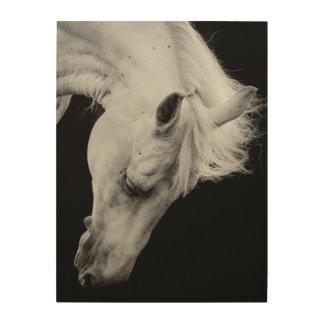 Impression Sur Bois Cheval blanc renversant sur le noir regardant vers