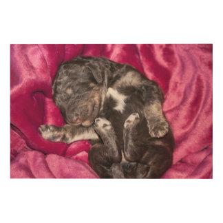 Impression Sur Bois Chiot adorable de caniche de sommeil
