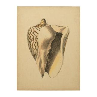 Impression Sur Bois Conque vintage Shell de sépia