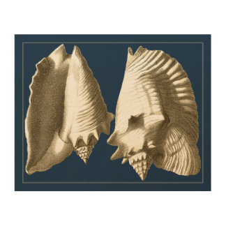 Impression Sur Bois Coquillages de conque de sépia