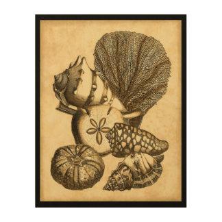 Impression Sur Bois Coquilles neutres et collection de corail