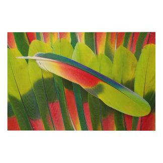 Impression Sur Bois D'Amazone de perroquet de plume toujours la vie
