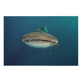Impression Sur Bois De la vue d'un requin de baleine