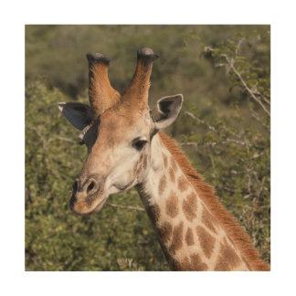 Impression Sur Bois Détail principal de girafe