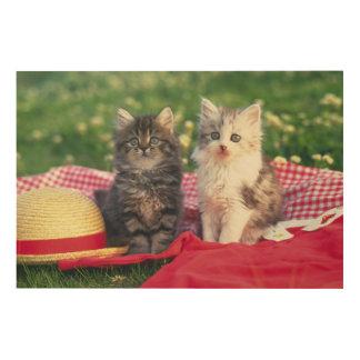 Impression Sur Bois Deux chatons se reposant sur une couverture