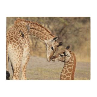 Impression Sur Bois Deux jeunes girafes