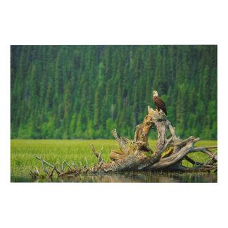 Impression Sur Bois Eagle chauve été perché sur la branche