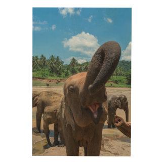 Impression Sur Bois Eau potable d'éléphant, Sri Lanka