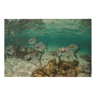 Impression Sur Bois École des poissons de laiss