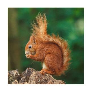 Impression Sur Bois Écureuil rouge des images   de Getty