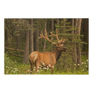 Impression Sur Bois Élans de Taureau en velours, Canada