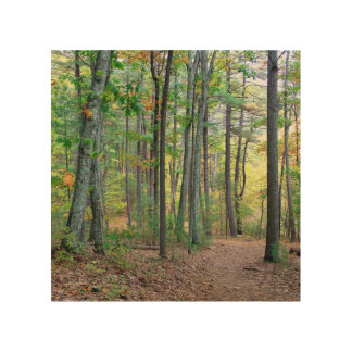Impression Sur Bois Étang de Walden : Sur le bois