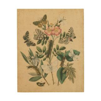Impression Sur Bois Étapes de la vie de papillon par le studio de