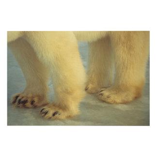 Impression Sur Bois Fermez-vous des pieds d'ours blanc