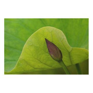 Impression Sur Bois Feuille et bourgeon | la Caroline du Nord de Lotus