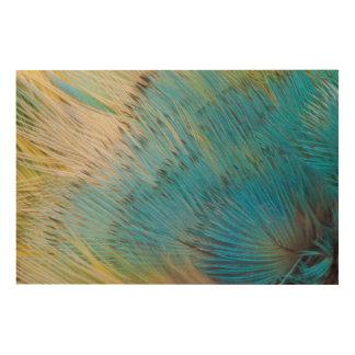 Impression Sur Bois Fin d'abrégé sur plume de perroquet