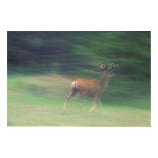 Impression Sur Bois Fonctionnement de cerfs communs de mule