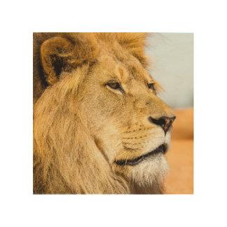 Impression Sur Bois Grand lion regardant loin